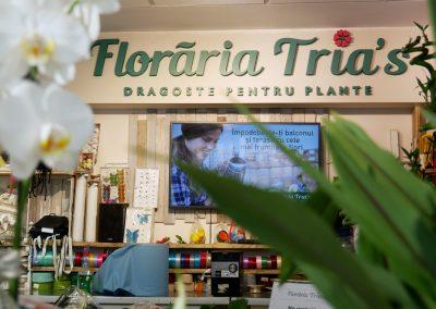 Florariile Tria's