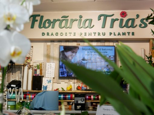 Tria's Flower Shops